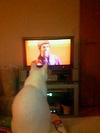 live_cat